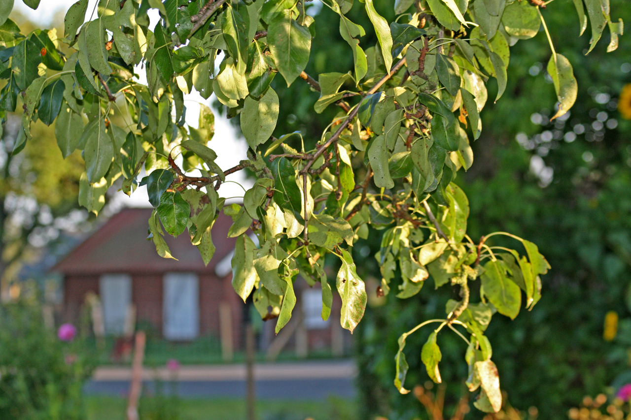 Gartenansicht – Elo von der Königsallee