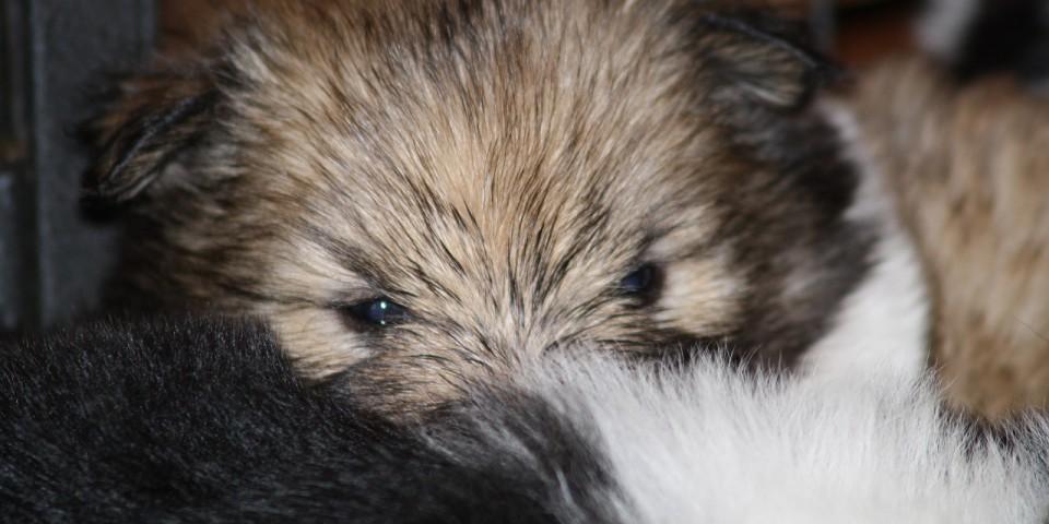 Hazel, 5 Wochen