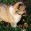 Hazel 5,5 Wochen