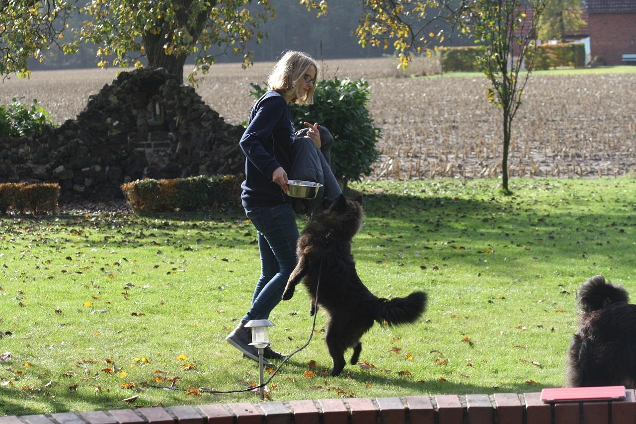 Dog-TV mit Olivia