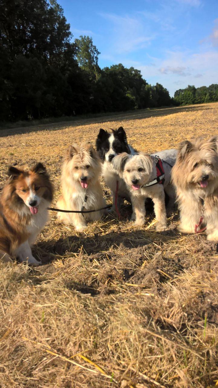 Jule in ihrem Element mit Mischa und drei G-Kindern Galadriel, Goofy und Gabby