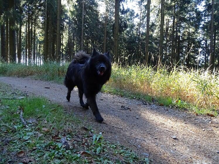 Das Wandern ist des Müllers Lust …
